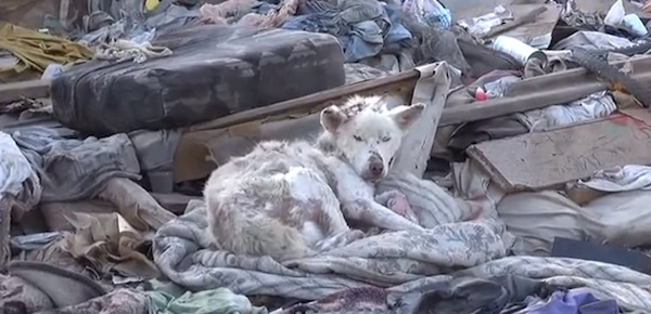 Homeless Dog Rescued From Junkyard