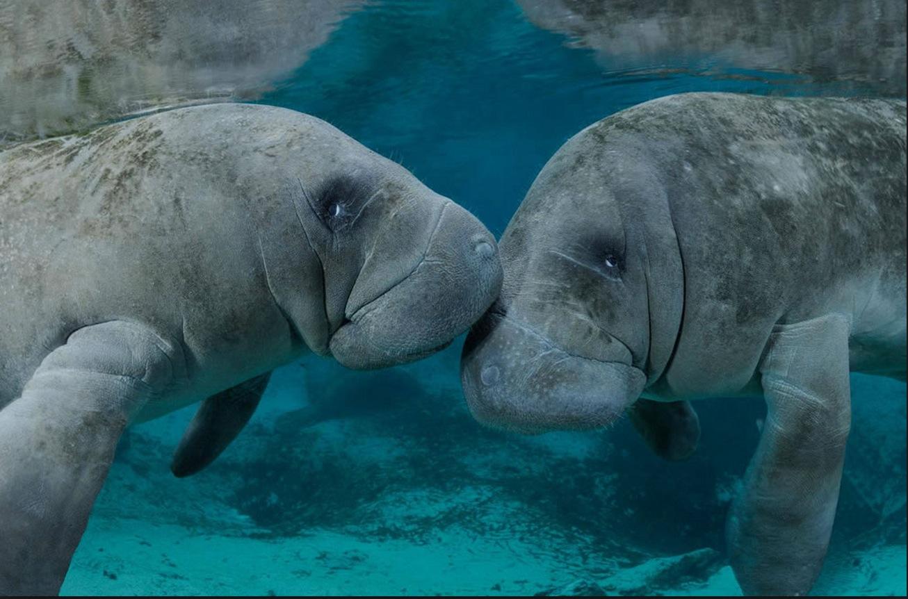 Фото морських тварин 7 фотография