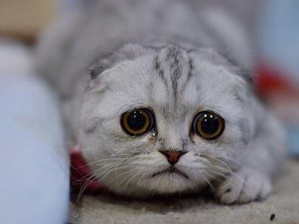[Image: cat-sad.jpg]