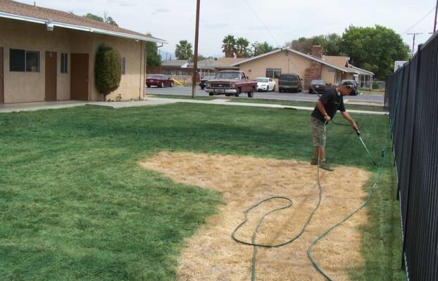 californians pay to have their lawns spray painted green. Black Bedroom Furniture Sets. Home Design Ideas