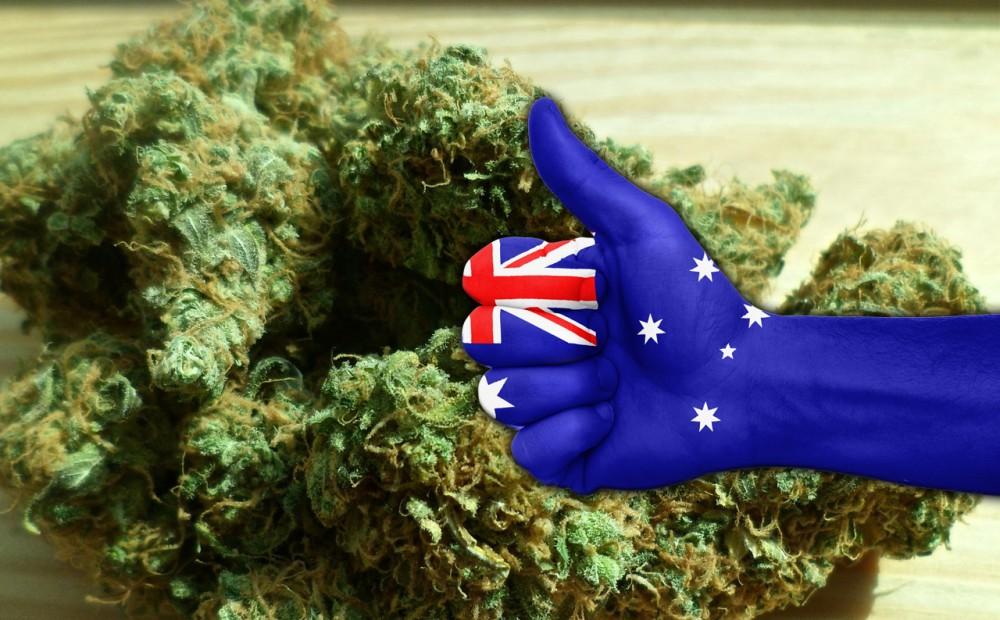 Resultado de imagen para australian cannabis