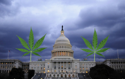 WashingtonDCWeed800x529