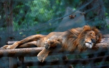 fifty-animals-have-starved-to-death-within-the-last-six-months-at-caricuao-zoo-one-of-venezuelas-main-zoos