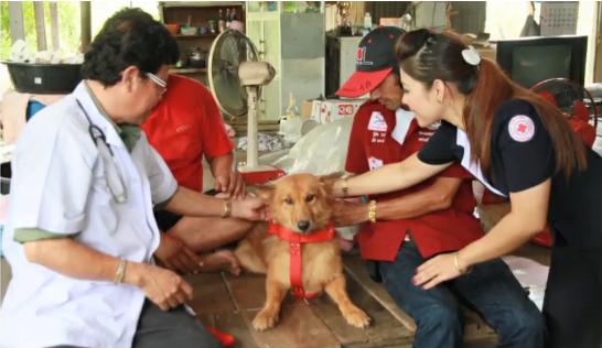 *VIDEO* Hero dog saves newborn baby left in dumpster