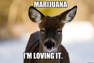 Man jailed for shooting marijuana-craving deer