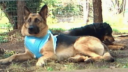 Police serve warrant at wrong house, shoot their dog, now refuse to pay vet bills (VIDEO)