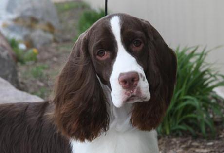 Homeowner's deaf dog sits on dumb home intruder until police arrive!
