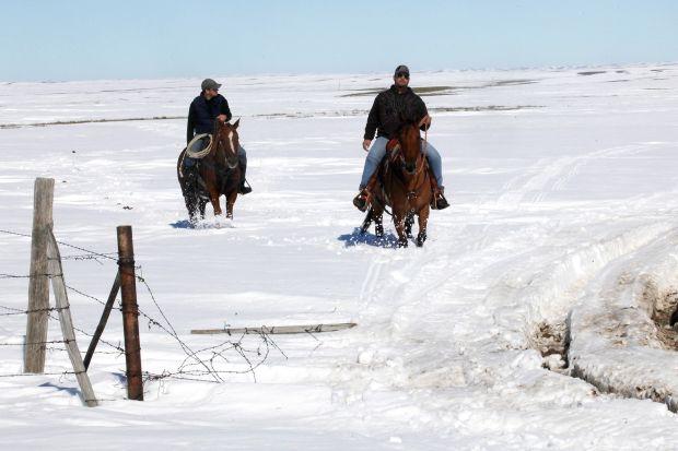 Killer blizzard in midwest devastated livestock (PHOTOS, GRAPHIC)