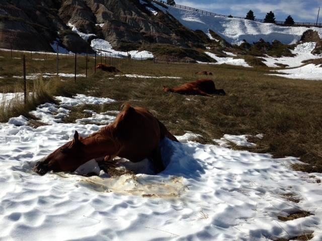 Hundreds of horses were killed
