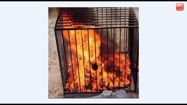 isis-cage.jpg