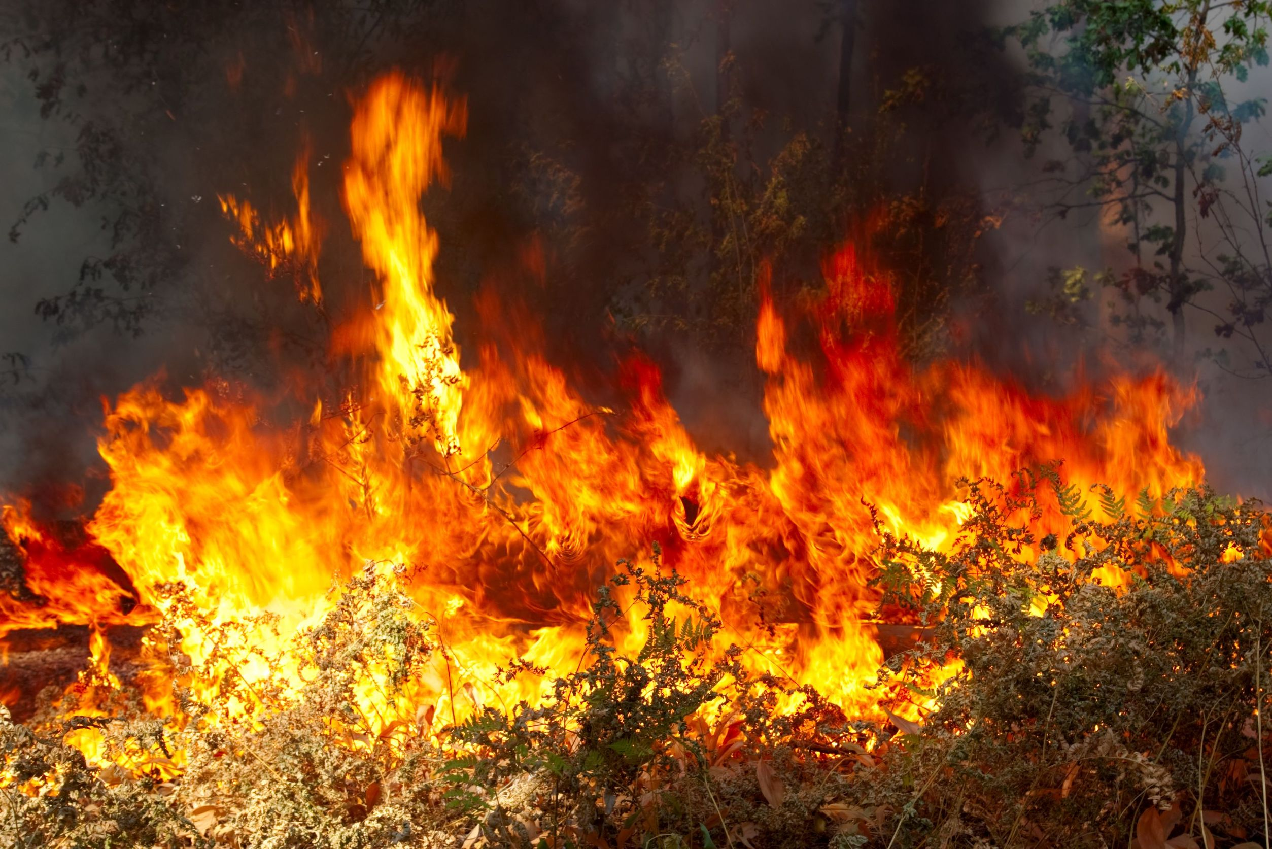 Global Warming Doesn't Exacerbate Wildfires, Obama's Policies Do