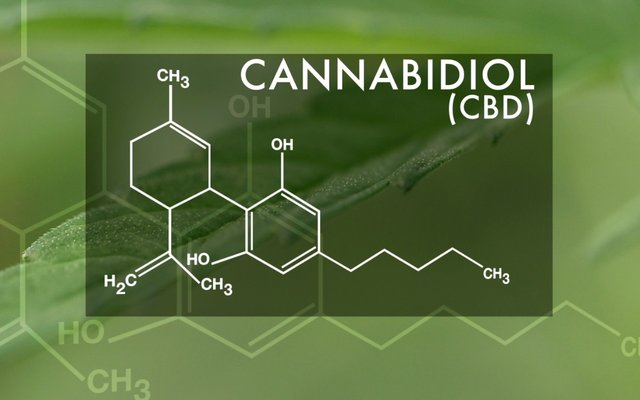 CBD Oil and Homeopathy Relation