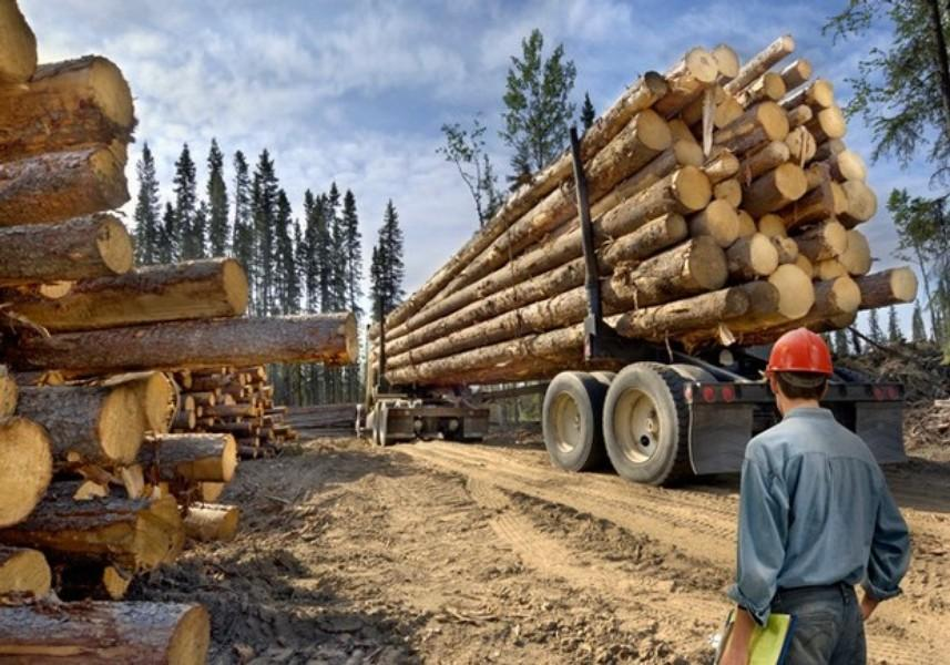 Eco-Terrorists May Have Spiked Logs To Cripple Lumber Mills