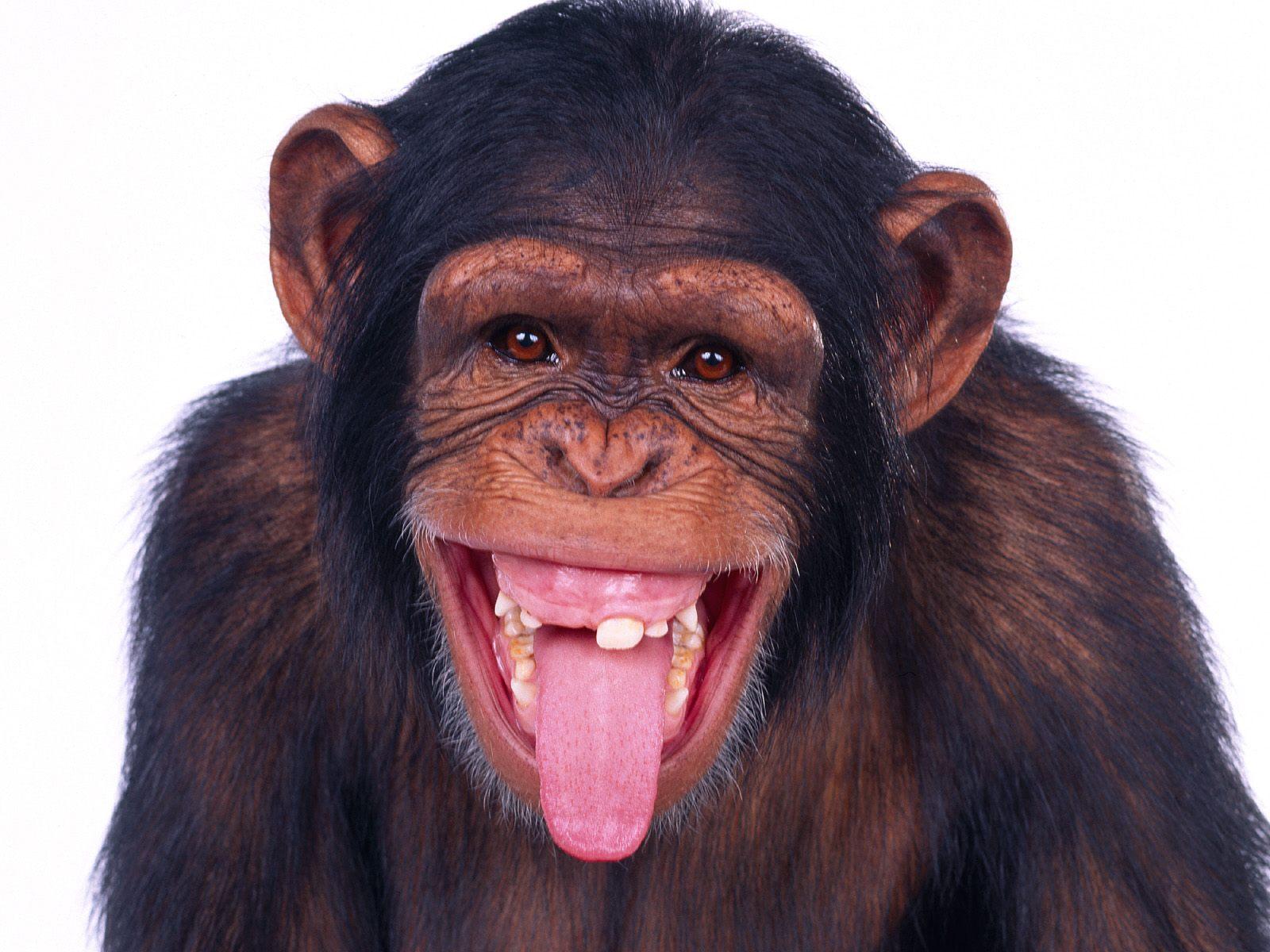 US Gov't Spent $800K To Study Monkey Drool
