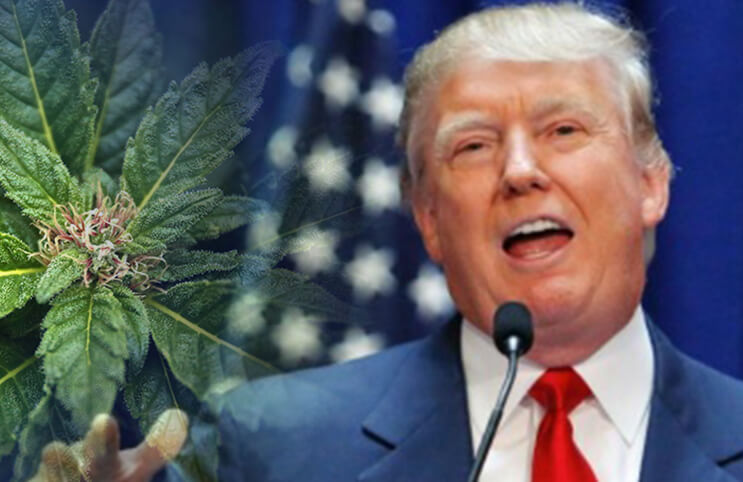 Fear and Loathing: The New Federal Marijuana Policy