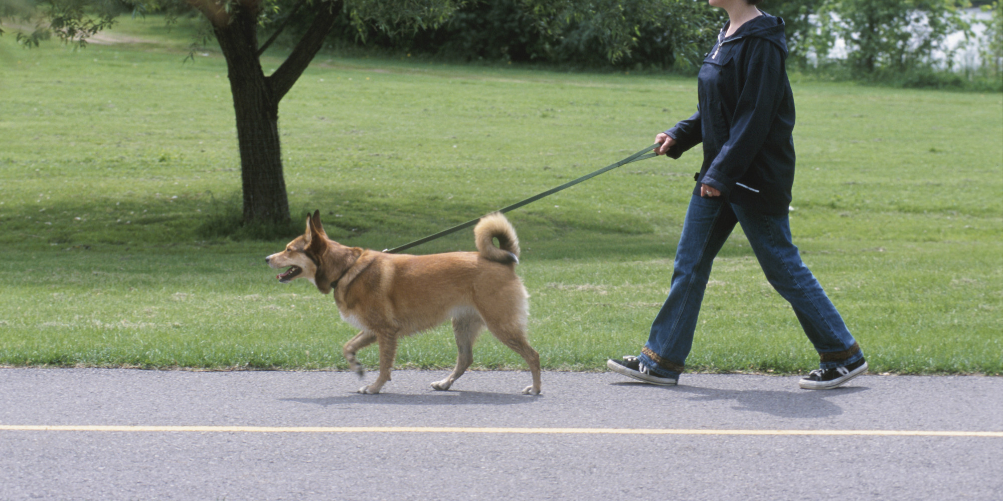 How To Get A Stubborn Dog To Walk