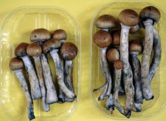 Denver To Vote On Legalizing Psychedelic Mushrooms