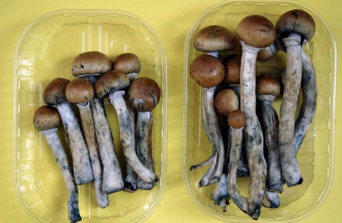 Denver To Vote On Legalizing Psychedelic Mushrooms