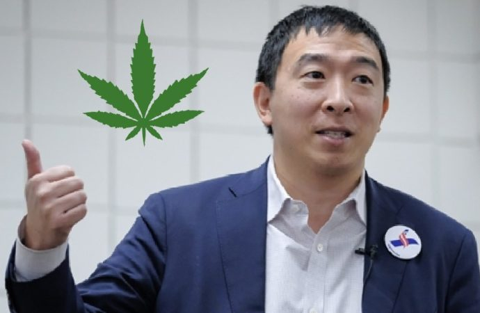 Dem Candidate Yang: Mass Pardon Non-Violent Pot Offenders