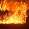 Australian Police Have Charged Several People For Intentionally Setting Bushfires. Activists Blamed Climate Change