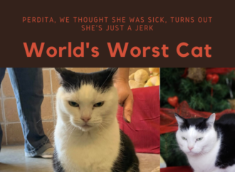 'World's Worst Cat' Has Over 115 Applications For Adoption, Shelter Says