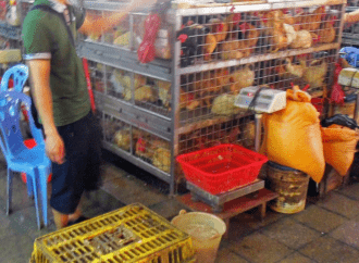 OPINION: Wet Markets Aren't the Problem, Regulations and Complacency Are